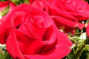 Kyla Rose